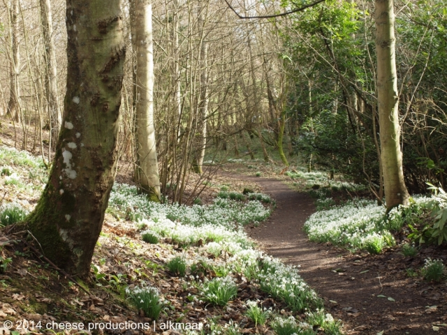 House of Dun, Snowdrops walk