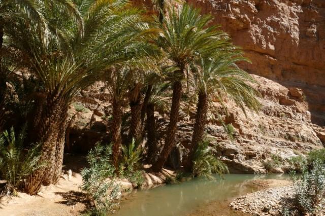 Marokko 2020-02 66