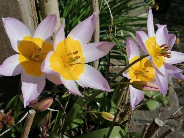 2020-04-04 02 Onze tuin