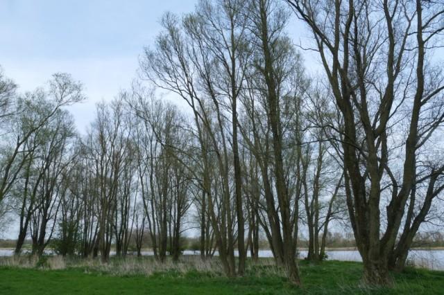 2020-04-10 06 Kleimeer
