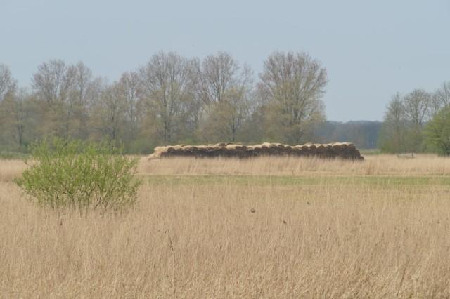 2020-04-12 09 Kleimeer